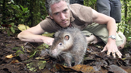 a giant rat - bosavi woolly rat