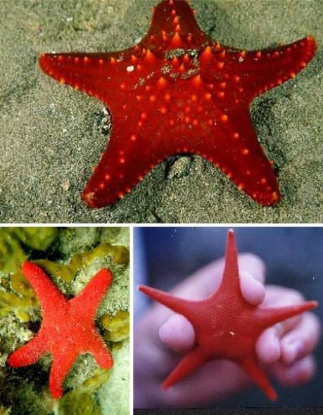 Haiwan Haiwan Warna Merah Yang Menakjubkan Hikmatun