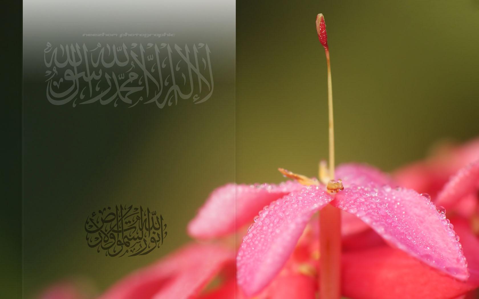 Wallpaper Islamik – Macro bunga Jejarum dengan titisan air embun